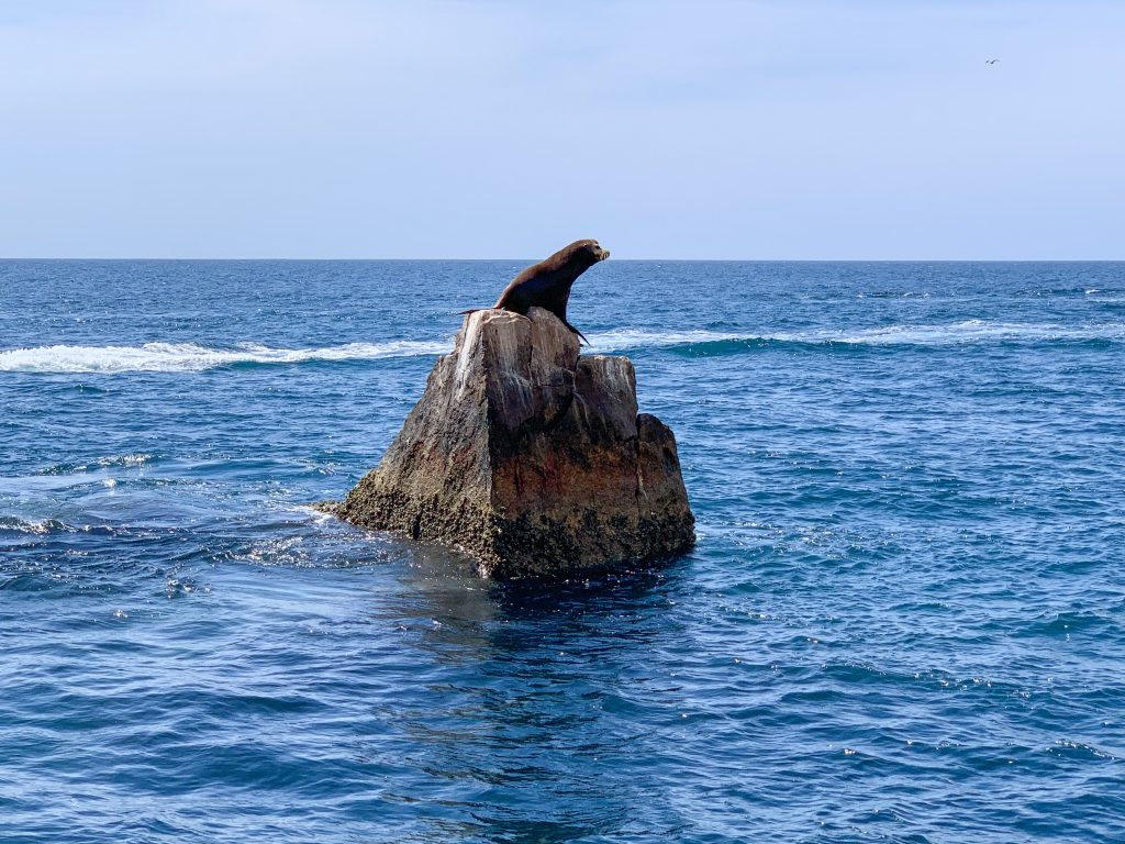 Sea Lion in Cabo San Lucas